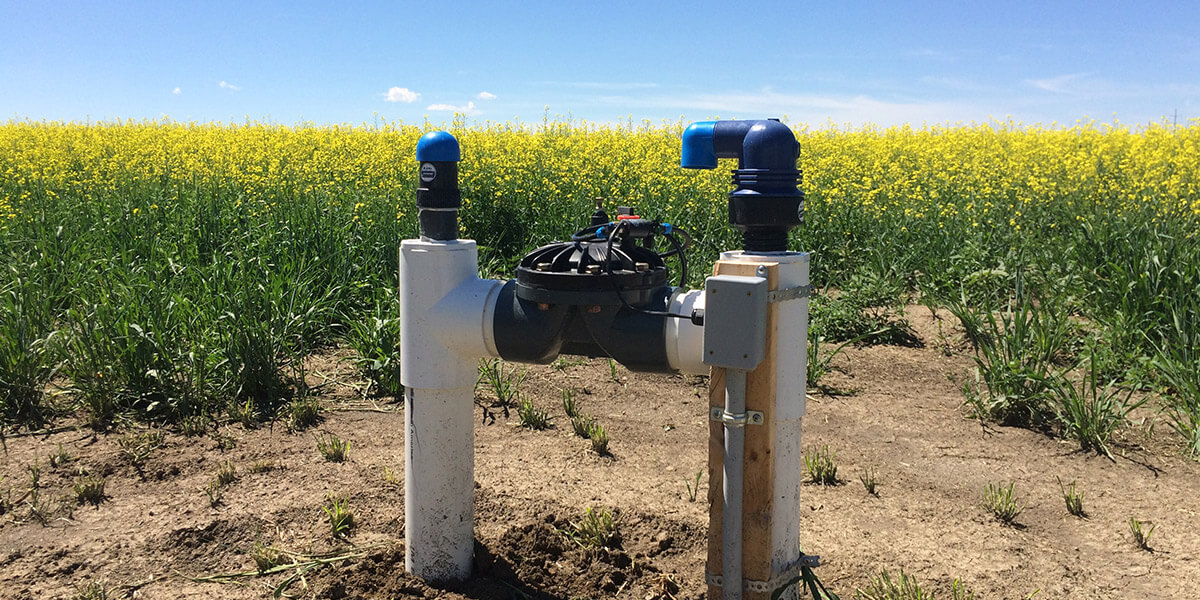 subsurface drip irrigation electric valve canola field