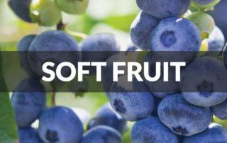 soft fruit berries