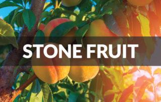 stone fruit peaches